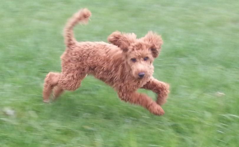 Wildes Hundekind